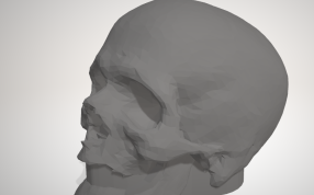 骷髅头模型