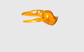 恐龍頭骨模型